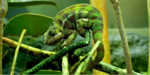 Chameleon Native Advertising